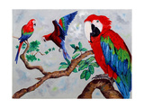 Macaws  2006