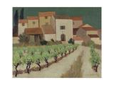 Vineyard  Provence