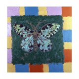 Leopard Moth  1996