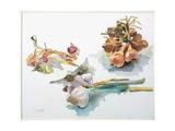 Study of Garlic and Shallots  C 1990
