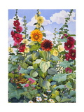 Hollyhocks and Sunflowers  2005