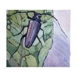 Musk Beetle  1991