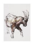 Young Ibex  Gran Paradiso  2005