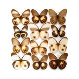 Taenaris Butterflies