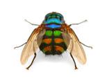 Sorong Fly 3