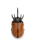 Thai Rhino Beetle