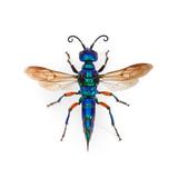 Borneo Wasp