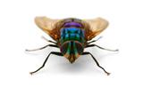 Sorong Fly 1