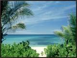 Beach and Palm Trees  Oahu  HI