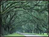Historic Wormsloe Plantation  Savannah  Georgia  USA