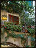 Grape Arbor and Flowers  Lake Garda  Malcesine  Italy