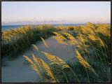 Sea Oats  Dunes  and Beach at Oregon Inlet