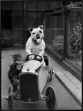 Dog and Cat Car