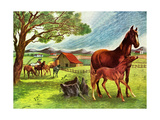 Horses - Jack & Jill