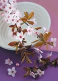Composition Zen : Branche de Prunus