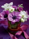 Bouquet de Printemps Anémones et
