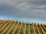 Sky and Vine