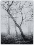 Bracken Woods