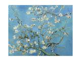 Branches d'amandier en fleurs, Saint-Rémy, 1890 Giclée premium par Vincent Van Gogh