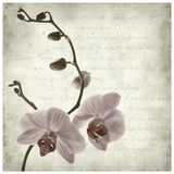 Retro Orchid