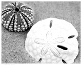 Sand Dollar and Sea Urchin
