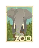 Zoo Elephant