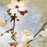 Fresh Blossoms I