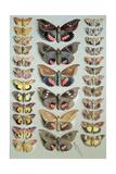 Papuan Moths  1917-18