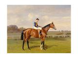 'Spearmint'  Winner of the 1906 Derby  1906
