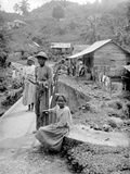 Maroon Negroes  Jamaica  1908-09