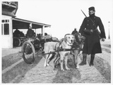 Belgian Machine Guns Pulled by Dogs  1914