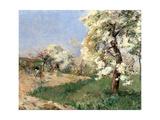 Pear Blossoms  Villiers-De-Bel
