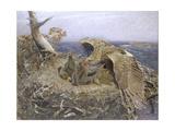 Sea Eagle's Nest  1907