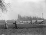 Line of Lorries on a Road  Somme  1916