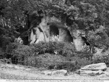 Grove of the Baths of Apollo  1930
