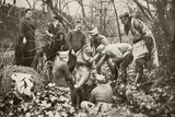 Unearthing Eve  a Statue by Auguste Rodin  Which Had Been Buried in Douai for Safekeeping During…