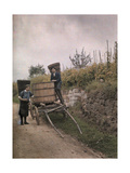 Two Men Collect Grapes in Alsace  France  1924
