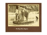 A White Elephant in the Court of King Prajadhipok