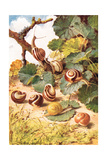 Land Snails  Illustration from 'Country Days and Country Ways'