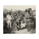 A Turkish Sniper  Disguised as a Bush  in Custody after Being Captured by Anzac Troops  from 'The…