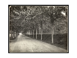 Tree-Lined Drive at the Home of Thomas Edison  1907