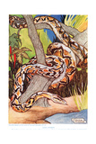Giant Python  Illustration from 'The New Natural History'  by John Arthur Thompson (1861-1933) …