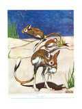 The Jerboa  Illustration from 'The New Natural History'  by John Arthur Thompson (1861-1933) …