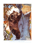 The Brown Bear (Ursus Arctos)  Climbing after Honey  Illustration from 'The New Natural History' …