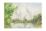 Mangrove Swamp  1924
