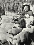 Chinese Pig Farm  Shanghai  1959