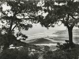 Torrey Pine Trees Frame a View of the Coast Along the State Highway  Near San Diego  California …