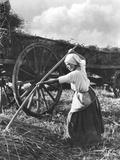 Harvester in Picardie  c1900