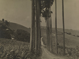A Long  Winding Trail Through the Island of Barbados  1922