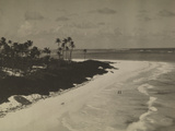 White Sands  Palm Trees and Surf of a Barbados Beach  1922